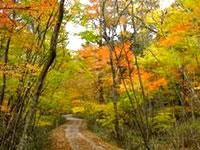 段戸裏谷原生林(きららの森)周遊コース